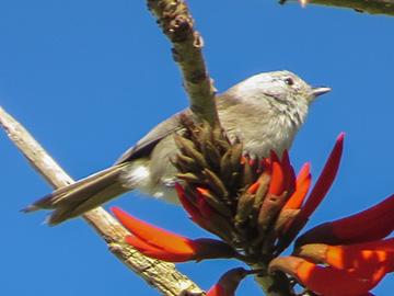 Tiritirimatangi Island